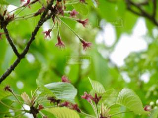 植物の花と木の写真・画像素材[1177664]