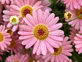 近くの花のアップの写真・画像素材[1198594]