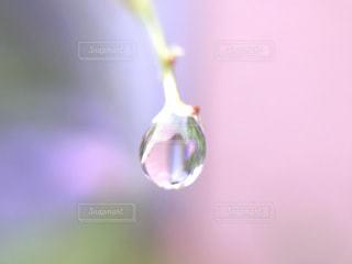 ピンク,水滴,ピンク色,pink