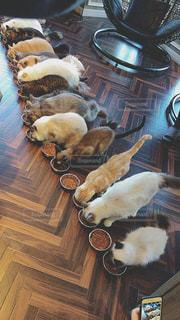 ご飯中の猫の写真・画像素材[1257786]