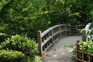 庭の橋の写真・画像素材[1175554]