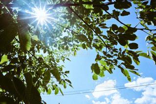 木の写真の写真・画像素材[1175555]