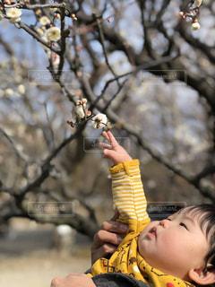 梅の咲き始めの写真・画像素材[1870461]