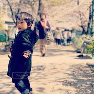 桜の道の散歩の写真・画像素材[4275147]
