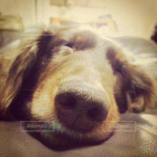 犬,わんこ,笑顔