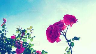 テーブルの上に花瓶の花の花束の写真・画像素材[1177017]