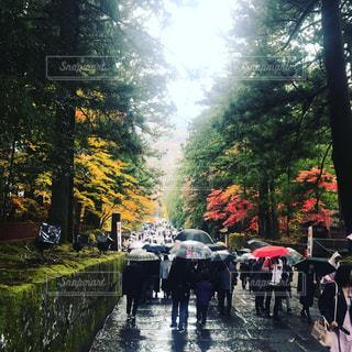 紅葉,雨,傘,散歩,日光,眺め,参道,雨傘