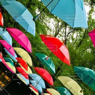 傘,梅雨,長野県,ハルニレテラス,アンブレラスカイ,軽井沢町