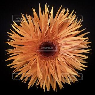 近くの花のアップの写真・画像素材[1199513]