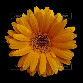 近くの花のアップの写真・画像素材[1199517]