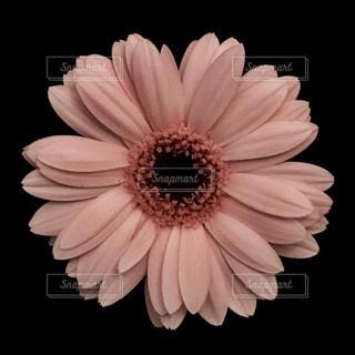 近くの花のアップの写真・画像素材[1199520]