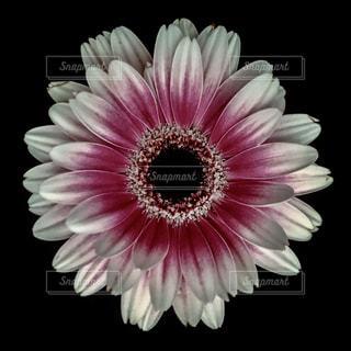 近くの花のアップの写真・画像素材[1199523]