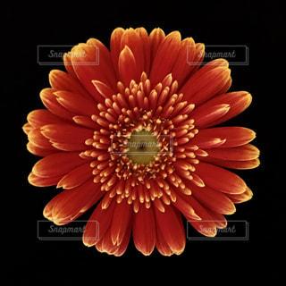 近くの花のアップの写真・画像素材[1199530]