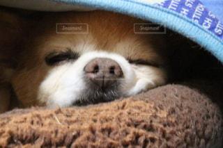 近くの帽子をかぶった犬の写真・画像素材[1185481]
