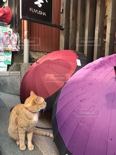 猫,夏,傘,屋外,青空,江ノ島