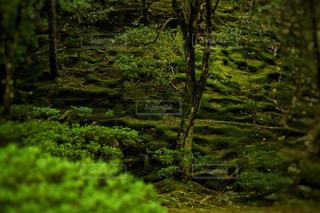 緑豊かな緑の森の写真・画像素材[1180278]