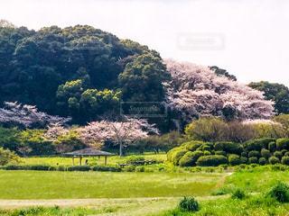 緑溢れる素敵な公園の写真・画像素材[1183001]