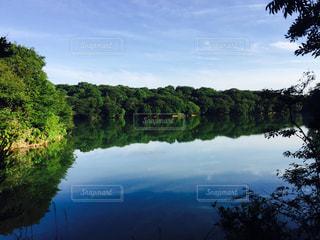 九大の森公園の写真・画像素材[1183919]