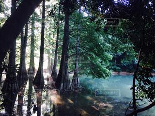 森公園の写真・画像素材[1183931]