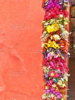 花,屋外,海外,ピンク,外国,旅行,旅,夏休み,メキシコ,pink,飾り