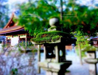 京都出雲大神宮にて見つけた苔帽子を被った石灯籠。の写真・画像素材[1182056]