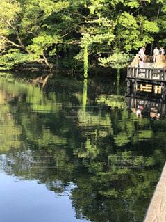 水面に映る、新緑。の写真・画像素材[1182513]