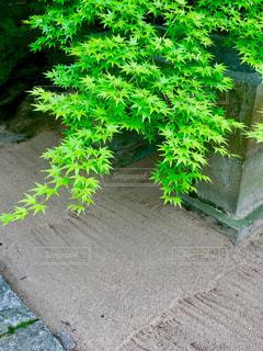 庭園の緑の植物の写真・画像素材[1225285]