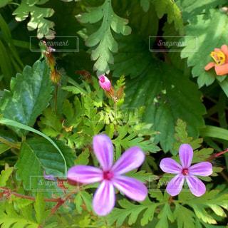 近くの花のアップの写真・画像素材[1230045]