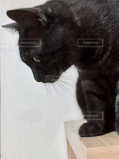 テーブルの上に座って猫の写真・画像素材[1256141]