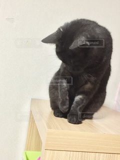 木製テーブルの上に座っている猫の写真・画像素材[1256142]