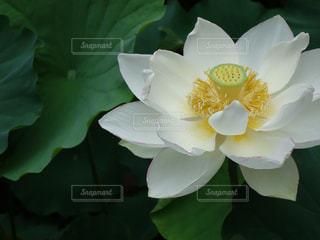 近くの花のアップの写真・画像素材[1276161]