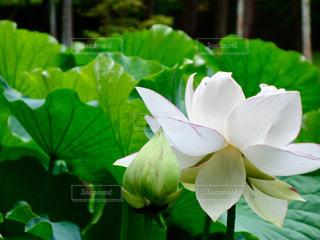 近くの花のアップの写真・画像素材[1276251]