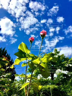 近くの花のアップの写真・画像素材[1315815]