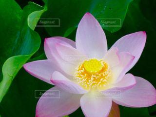 近くの花のアップの写真・画像素材[1367919]