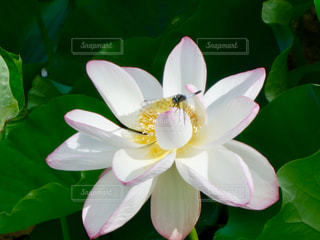 近くの花のアップの写真・画像素材[1368151]
