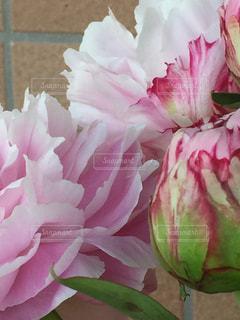 近くの花のアップの写真・画像素材[1368186]