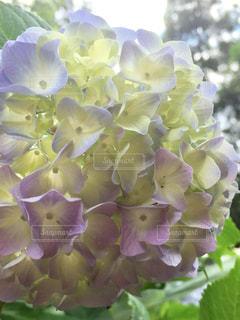 近くの花のアップの写真・画像素材[1368424]