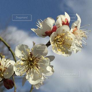 テーブルの上の花の花瓶の写真・画像素材[1368615]