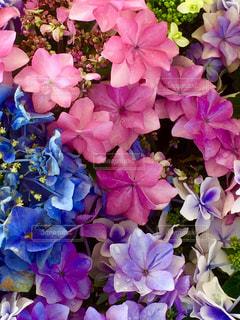 近くに紫の花のアップの写真・画像素材[1369733]