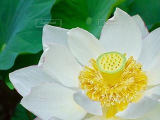 近くの花のアップの写真・画像素材[1369751]