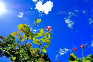 曇りの日に花の花瓶の写真・画像素材[1369784]
