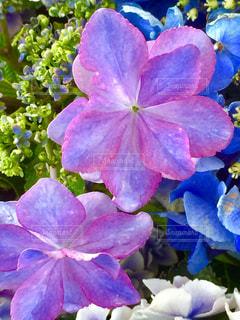 近くに紫の花のアップの写真・画像素材[1369786]