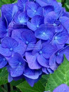 近くの花のアップの写真・画像素材[1370739]