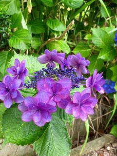 近くの花のアップの写真・画像素材[1372153]
