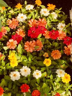 近くの花のアップの写真・画像素材[1372331]