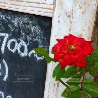 近くの花のアップの写真・画像素材[1378725]