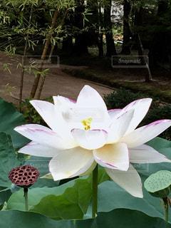 テーブルの上の花の花瓶の写真・画像素材[1381243]
