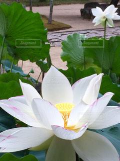 近くの花のアップの写真・画像素材[1381521]