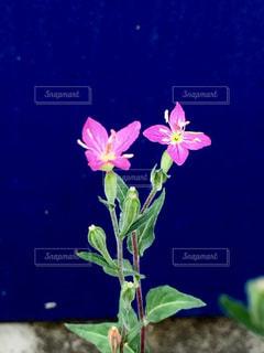 テーブルの上に座っての花で一杯の花瓶の写真・画像素材[1381796]