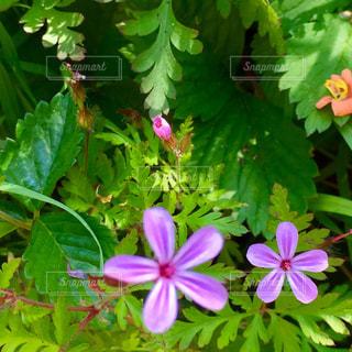 緑の葉とピンクの花の写真・画像素材[1386935]
